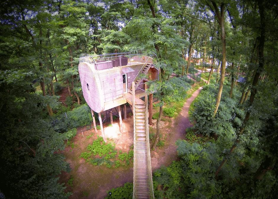 Themenhotel in den Baumwipfeln