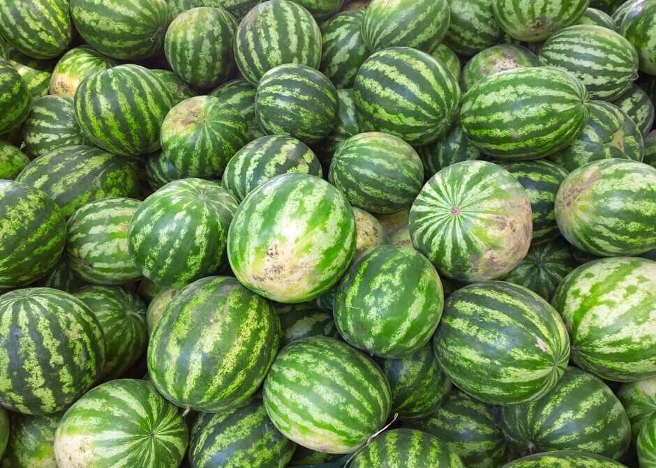 Fiesta Mare de Déu: Wer hat die größte Melone?
