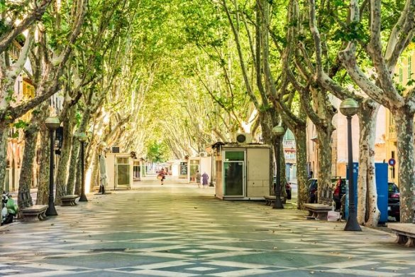 Passeig del Born in Mallorca