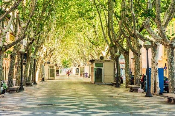 Passeig del Born in Mallorca