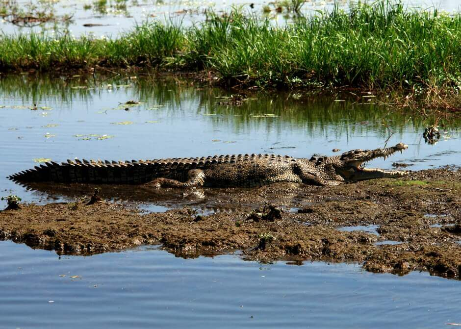 Krokodil im Kakadu Nationalpark