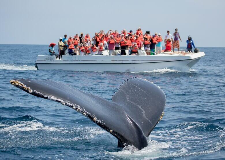 Whale Watching in der Dominikanischen Republik