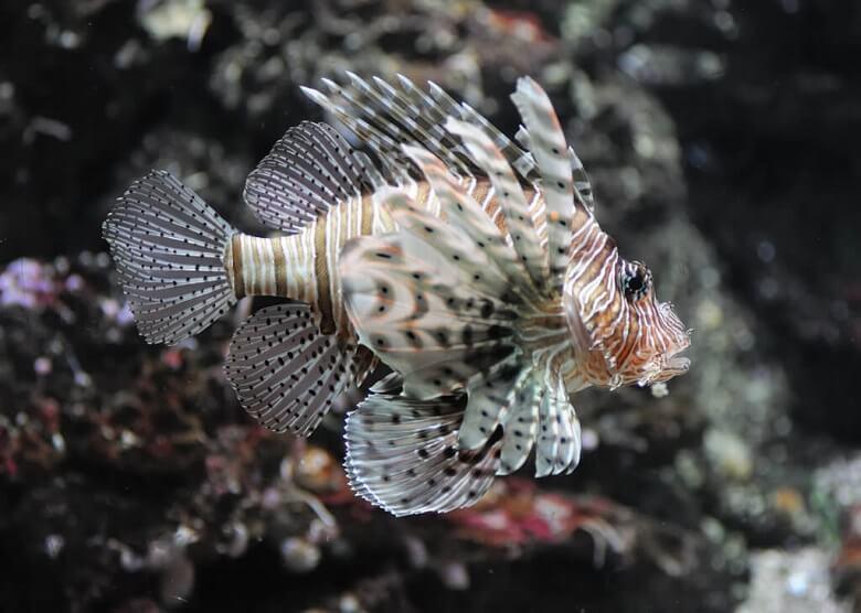 Fisch im Aquarium des Artis Zoos