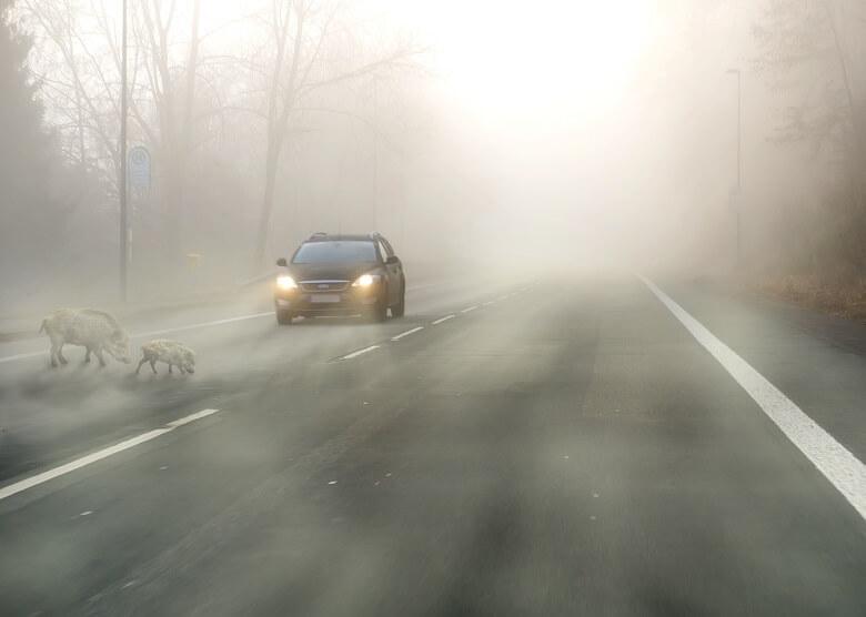 Wildwechsel auf der Landstrasse bei Nebel