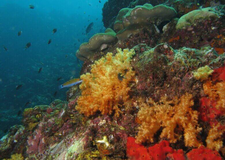 Korallenriff vor Ko Lanta