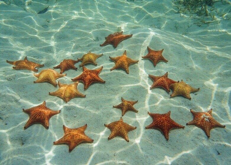Beeindruckend: Der Starfish Beach in Bocas del Toro