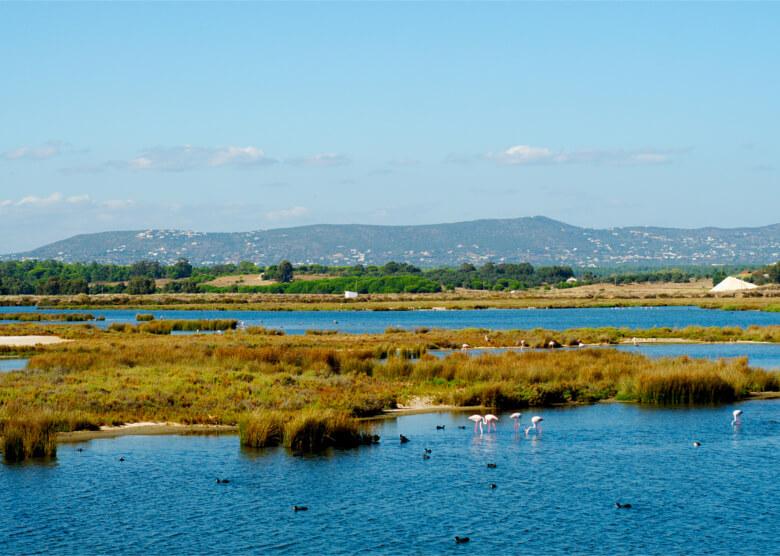 Flamingos im Naturpark Ria Formosa