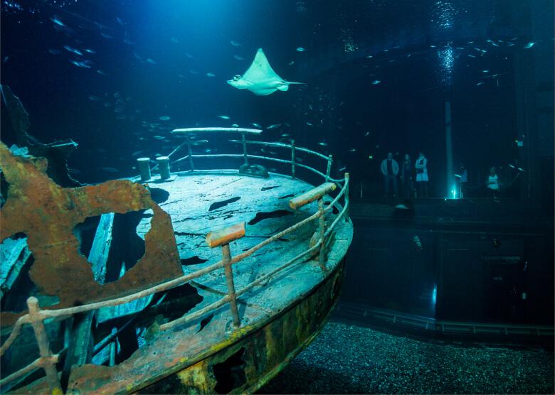 Wrack im Aquarium des Ozeaneum