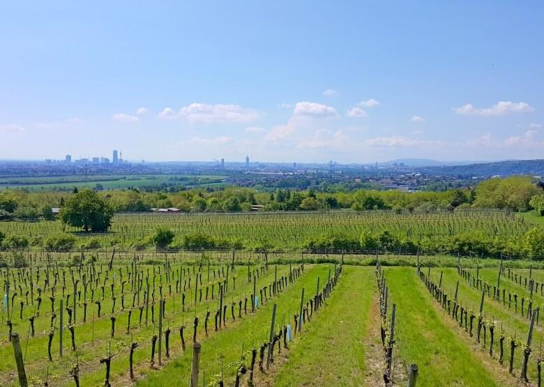 Weinbauangebiet am Bisamberg in Österreich mit Blick auf Wien