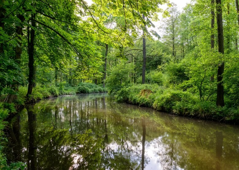 Schöne Reisziele in Deutschland: Auch der Spreewald gehört dazu