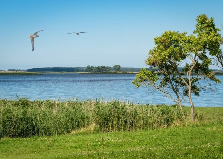 Die Boddenlandschaft in Vorpommern