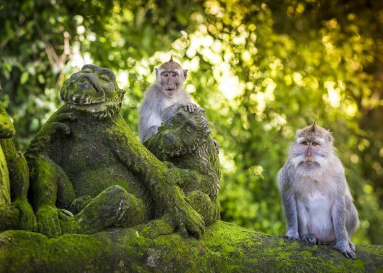 Affenwald (Monkey Forest) von Ubud auf Bali