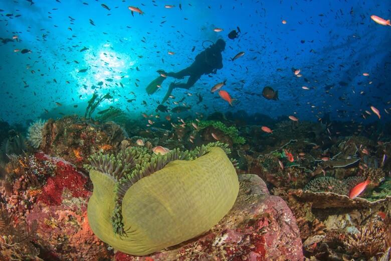 Taucher am Ningaloo Reef in Westaustralien