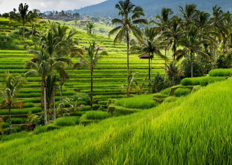 Reisterrassen in Ubud auf Bali, Indonesien