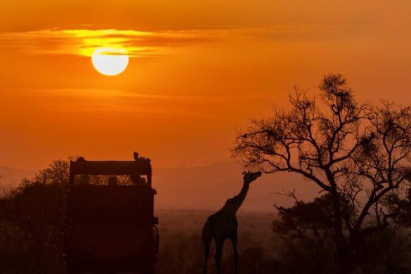 Afrikanische Steppe mit Giraffe und Sonnenuntergang