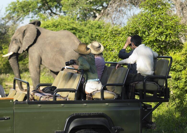 Vier Personen im Auto auf Safari mit Elefant