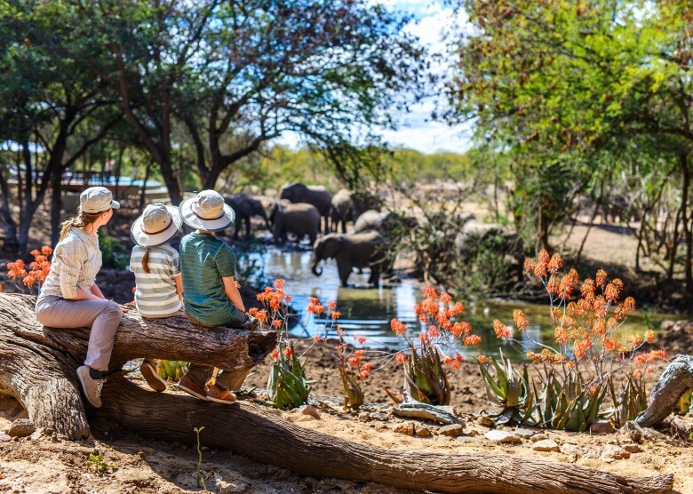 Familie auf Safari beobachtet Elefanten an Wasserloch