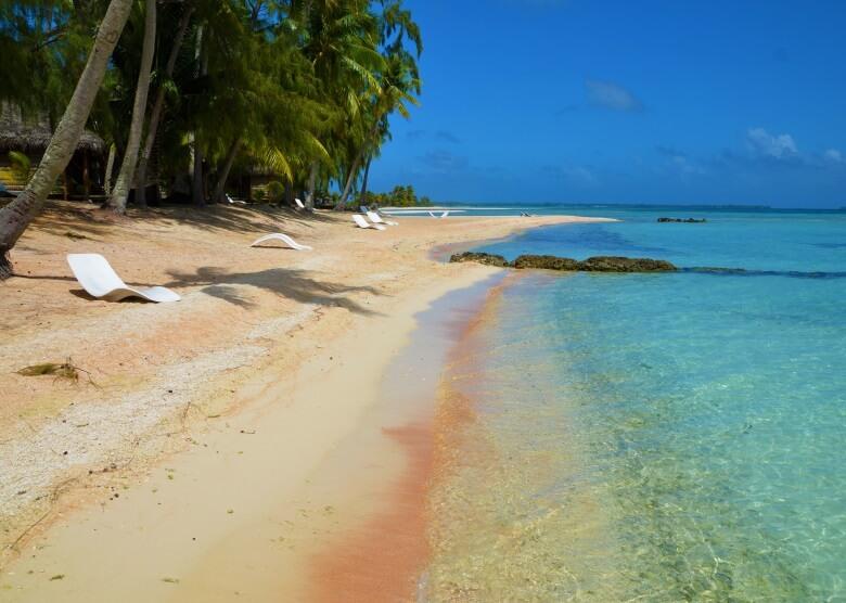 Palmen und rosa Sand am Strand Tikehau, Französisch-Polynesien