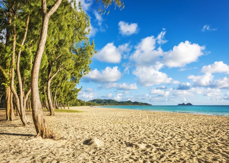 Eisenbäume auf dem Waimanalo Beach auf Hawaii