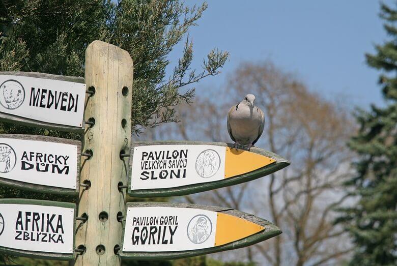 Wegweiser im Prager Zoo