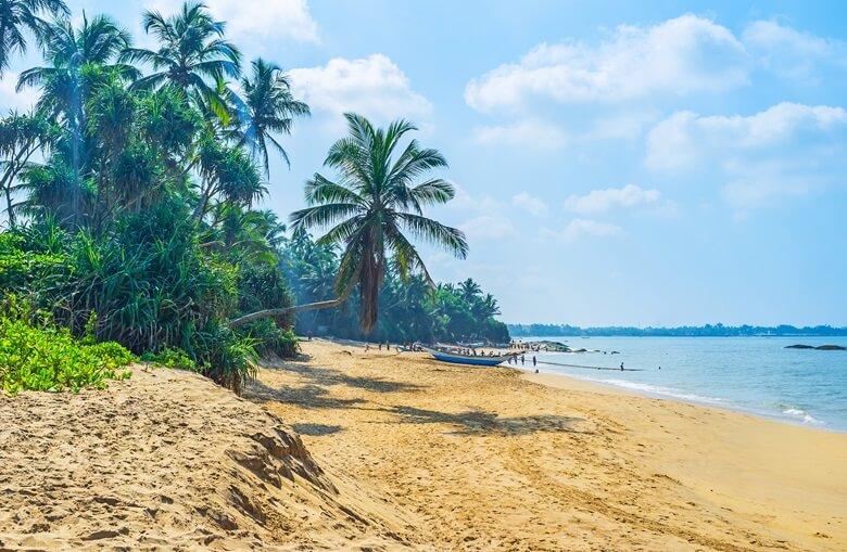 Langer Sandstrand Bentota mit Palmen in Sri Lanka