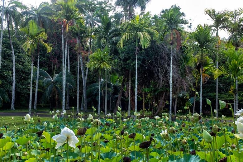 Botanischer Garten Pamplemousses auf Mauritius