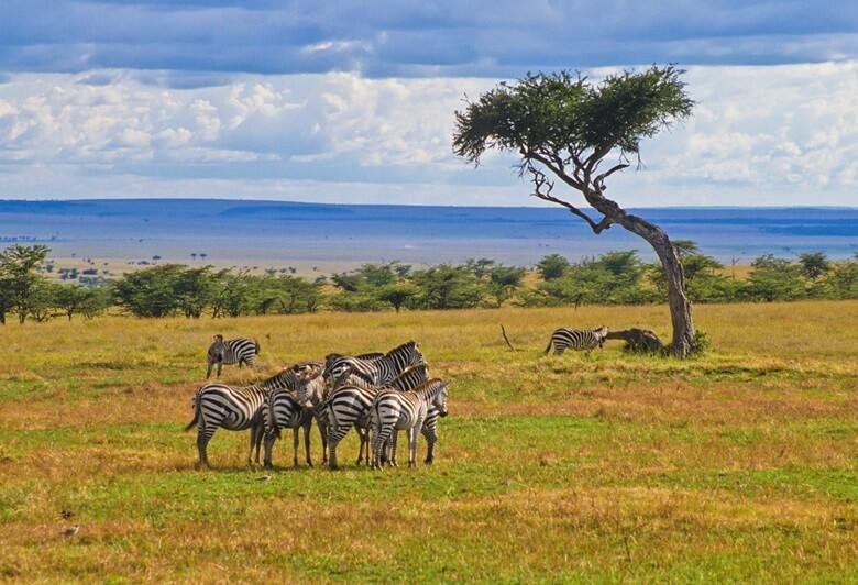 Zebras in einem Nationalpark in Kenia vor traumhafter Bergkulisse