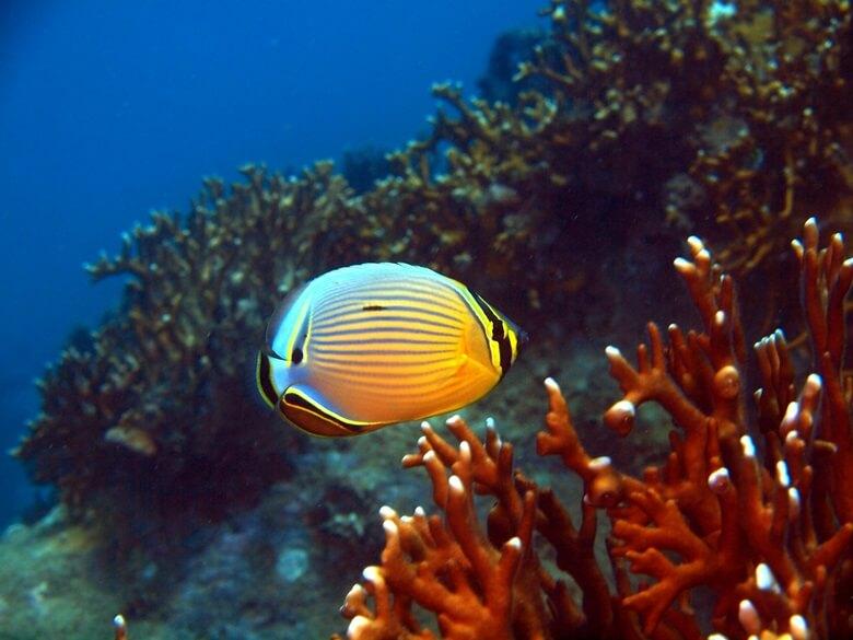 Korallenriff mit Fisch bei Nha Trang in Vietnam
