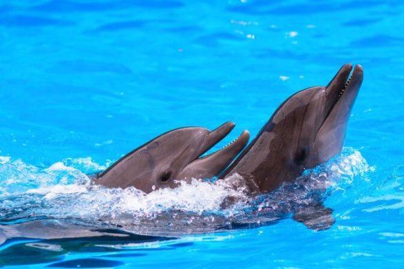 Zwei schwimmende Delfine