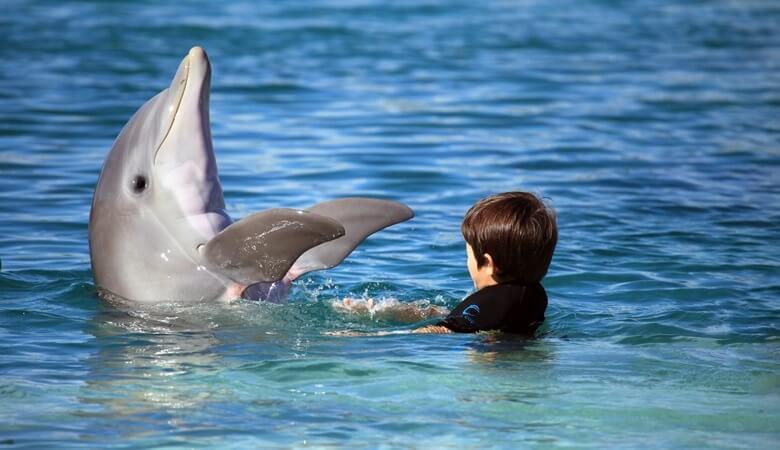 Junge schwimmt mit einen Delfin