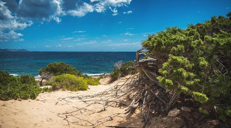 Auf einer Wanderung lässt sich die schöne Natur Ibizas entdecken