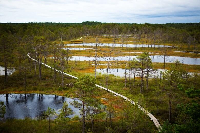 Hochmoor von Viru im Lehemaa-Nationalpark in Estland
