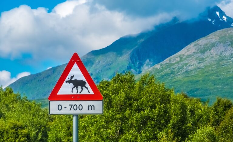 Wildwechsel-Schild in Norwegen