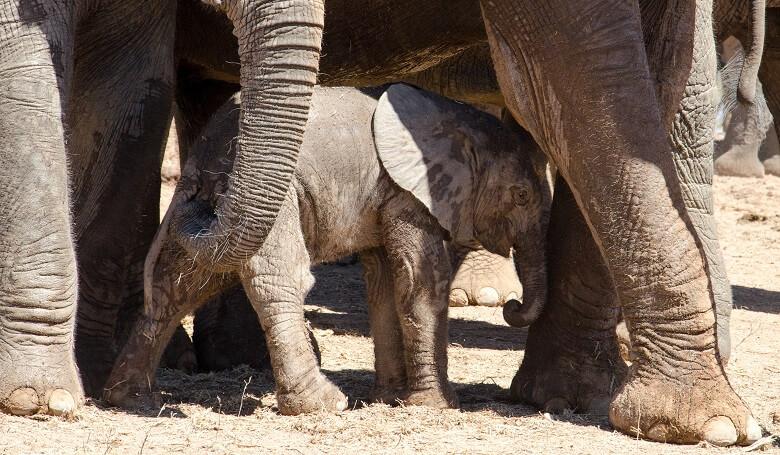 Elefantenbaby auf der Südafrika-Rundreise