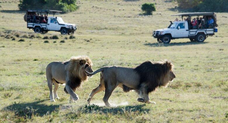 Safari auf der Südafrika-Rundreise