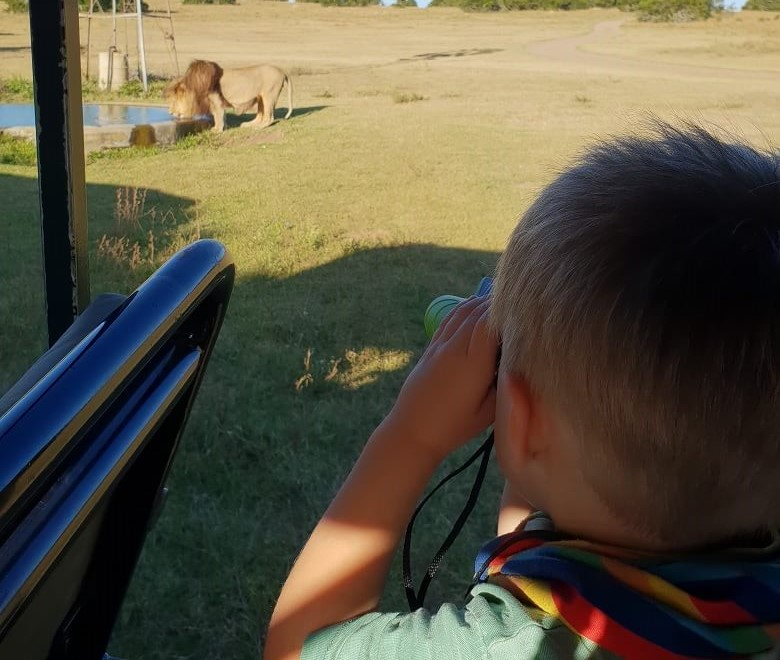 Safari mit Kleinkind in Südafrika