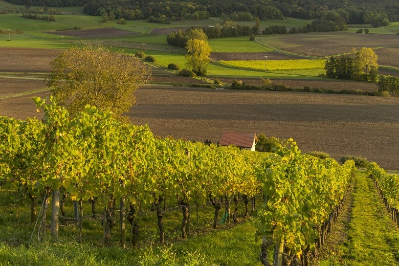 Weinberge in der Region Steigerwald