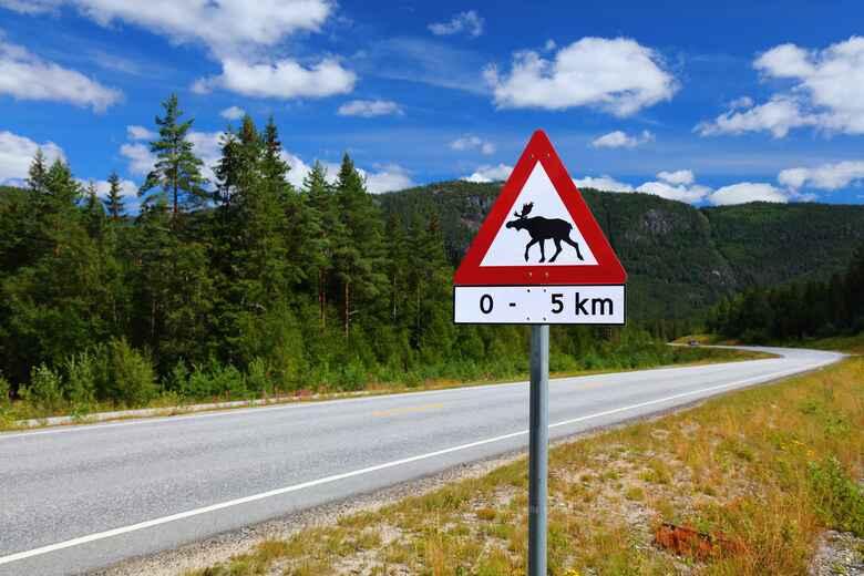 Elch-Warnung: Verkehrsschilder in Norwegen