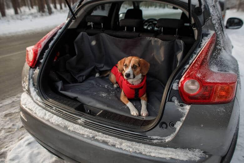 Hund im Auto mit Decke